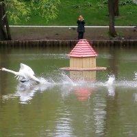 Бегущий по воде :: Ольга Довженко