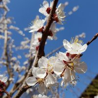 Трудно молчать о Весне... :: LORRA ***