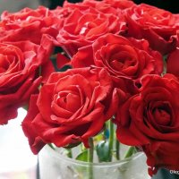 цветы для любимых розы :: Олег Лукьянов