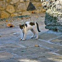 Ещё немного о кошках... :: Наталья Костенко