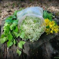 Время заготовок лечебных растений! :: Андрей Заломленков