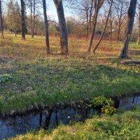 Весна :: Сапсан