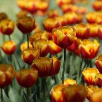 Весна :: Андрей Lyz