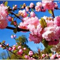 Весна.Май. :: Валерия Комова