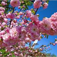 Весенняя краса. :: Валерия Комова