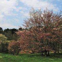 Цветущий май в Ботаническом саду. :: Aida10