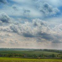 Майский день в поле :: Сергей Шаталов