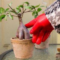 Как называется это растение? :: Роман Алексеев