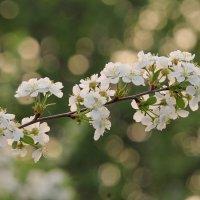 Весны цветение :: tamara kremleva