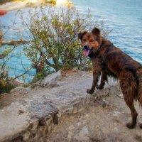 Морской пёс :: east3 AZ