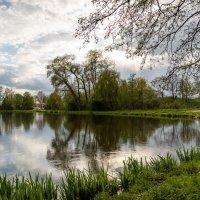 У дерева :: Николай Гирш