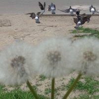Голуби мечтают летать далеко, широко и глубоко - по всему земному шару, :: Alex Aro Aro Алексей Арошенко
