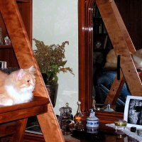 Кошка в интерьере :: Елена Даньшина