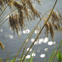 Ветви прудовые :: sorovey Sol