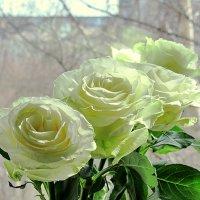 Розы в апреле :: Ольга Елисеева