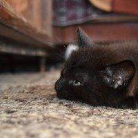 Когда весь мир достал! (Из жизни котенка по имени Носок) :: Дмитрий Печенкин