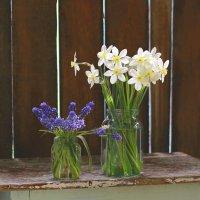 Цветы весенние :: Наталья Казанцева