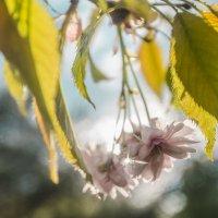 солнечный цветок :: Вячеслав Побединский