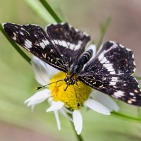 Бабочка :: SanSan