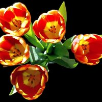 Тюльпаны. :: Ирина ***