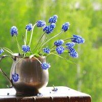 Мускарики - цветы весенние :: Наталья Казанцева