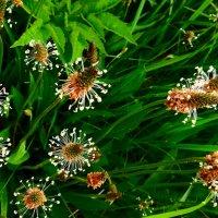 Трава цветет :: Михаил
