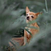 Собака в зелени :: Алина Аристова