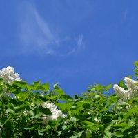 Какое небо голубое.. :: zoja