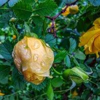 дождь :: жанна janna