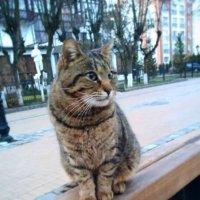 зеленоградский кот :: Елена Красильникова