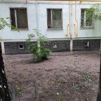 Дождливый день. Найди кота!) :: Игорь Ч.