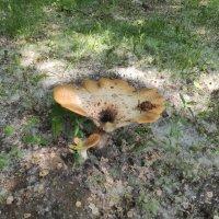 Городские грибы :: Игорь Ч.