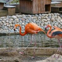 птицы и не только московского зоопарка- весна. :: юрий макаров