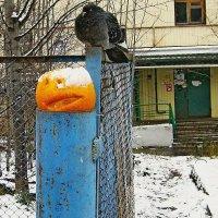 После хеллоуина :: Олег Аникиенко