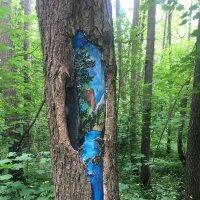 картинки в лесу :: ИРЭН@ .