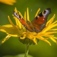 Краски лета :: Петр Беляков
