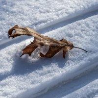 Воспоминание о Зиме :: Александр Белый