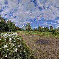 Дорога в лето :: Алексей Мезенцев