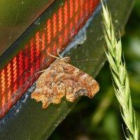 бабочки обживают моё авто...10 :: Александр Прокудин