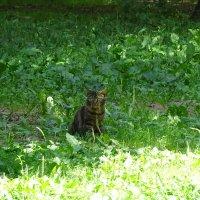 Кто-то сидит в траве! :: Anna-Sabina Anna-Sabina