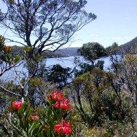 На острове Тасмания, Австралия :: ГЕНРИХ