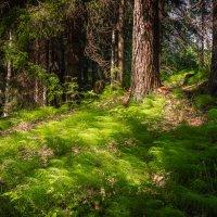 В карельском лесу. :: Олег Бабурин