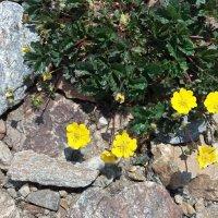 Цветы Домбая :: Galina Solovova