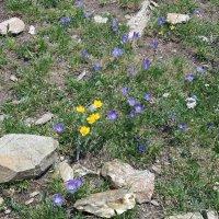 Среди камней цветут цветы :: Galina Solovova
