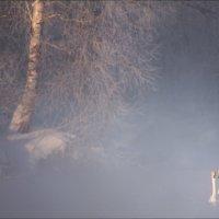 В утреннем тумане :: Влад Соколовский