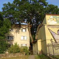 граффити на домах Выборга :: Sabina