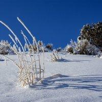 мороз и солнце день чудесный :: Petr @+