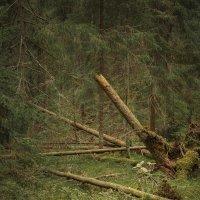 полдень в лесу :: Максим Вышарь