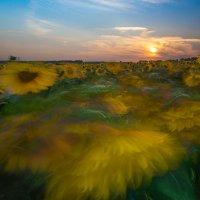Целое поле заката. :: Сергей Мартьяхин