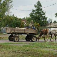Пара лошадей. :: сергей